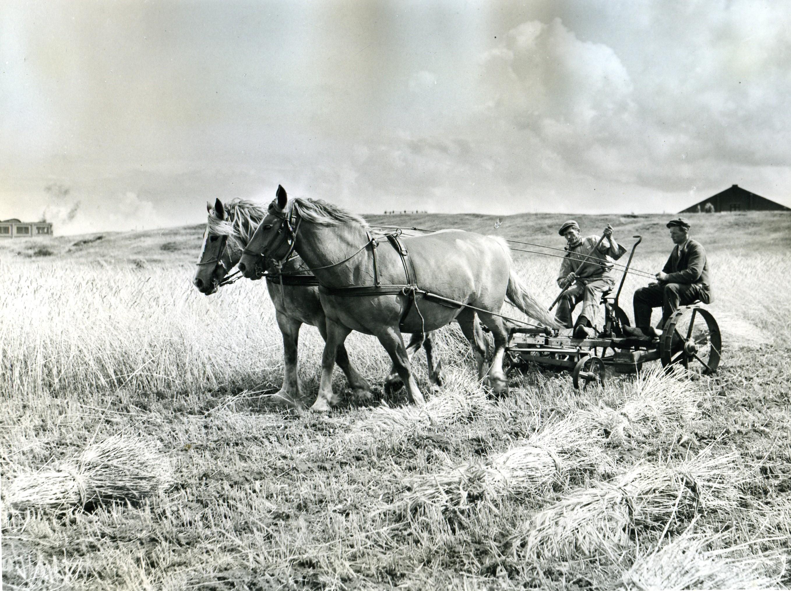 Bouwland met twee paarden en oogstmachine juli 1953